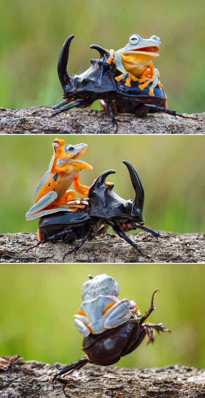 frog roach.jpg