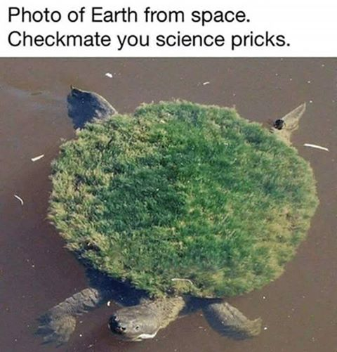 turtle flat earth.jpg